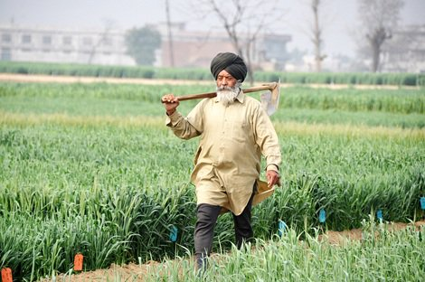Farmers won't have to pay for power under DBTE, declares Punjab CM