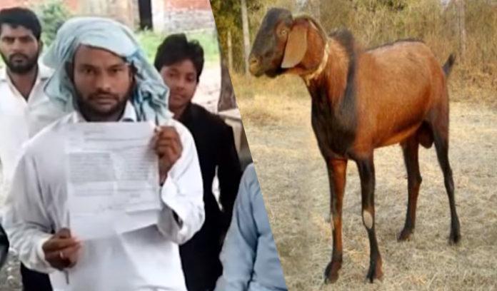 Haryana in 8 People Goat rape ,Goat Death