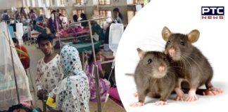 kerala-in-laptopsirosis reason 10 people Death