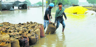 Farmers at a huge losses as rainfall lashes parts of Punjab