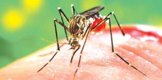 Two dengue cases reported in Fazilka on Wednesday