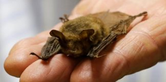 Did you touch bats in Ontario Lake? If yes, don't forget to test for rabies