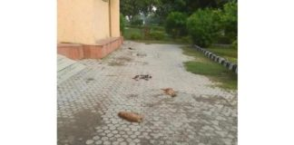 100 stray dogs poisoned to death near Infosys Hyderabad campus
