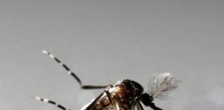 61 Zika virus cases detected in Rajasthan