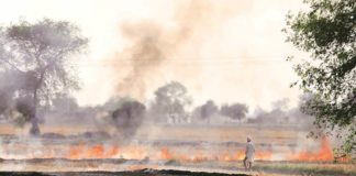 Punjab agri officials instructed against paddy crop stubble burning