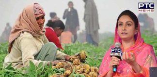 Hawk potatoes outside CM