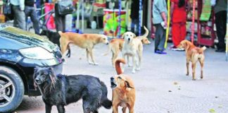 Two-year-old mauled to death by stray dogs in Haryana