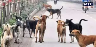 10-year-old mauled to death by stray dogs in Nabha