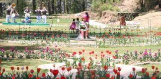 Tulip Garden Shimla