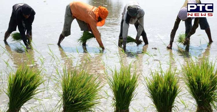 Punjab CM Captain Amarinder announces Early Sowing Of Paddy