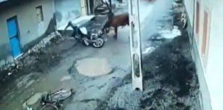 Bull Attack 2