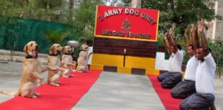 Rahul Gandhi tweets Army dog squad yoga pic with a caption 'New India', gets trolled