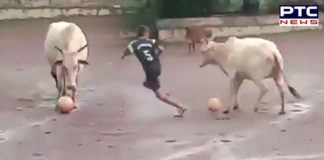 Watch: Bull playing football with local kids, Harsha Bhogle himself shares viral video