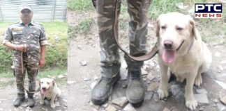 CRPF dog Ajaxi resuce CRPF personnel of 72nd Battalion in Jammu and Kashmir
