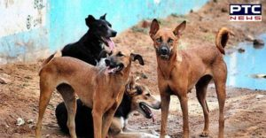 Bhogpur: Stray Dogs Migrant laborer Attack , Death