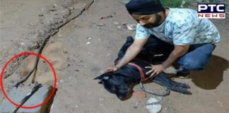 Heartbreaking! Dog dies saving his owner from being electrocuted