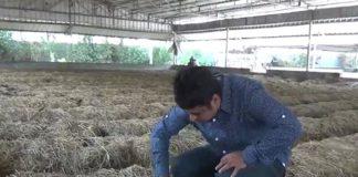 Farmer 5