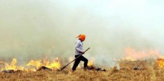 As air quality continues to dip, NASA images show stubble burning in Punjab, Haryana