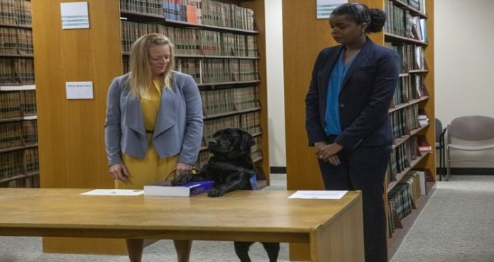 Labrador sworn-in at state attorney office in Chicago to help assault victims