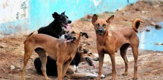 Man Sexually Assaulted Female Dog | Thane Maharashtra Animal Cruelty