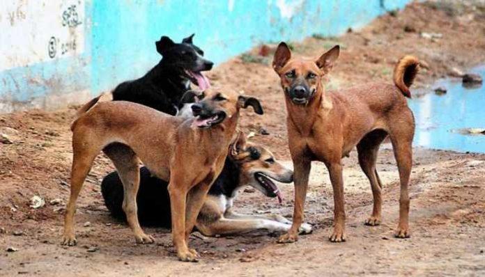 Man Sexually Assaulted Female Dog   Thane Maharashtra Animal Cruelty