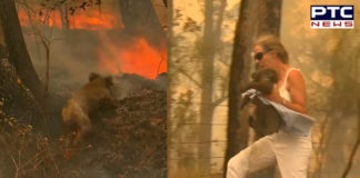 Australia: Woman risks her own life to save koala trapped in bushfire [VIDEO]