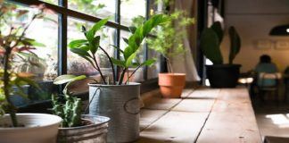 As smog smothers north India, people resort to air purifying indoor plants