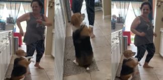 Dog shows off dance moves on kitchen floor [VIDEO]