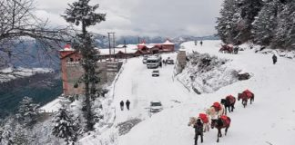 Himachal Pradesh: Shimla receives first snow of season, 4 NHs blocked