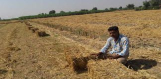 Deputy CM Dushyant Chautala will inaugurate straw harvesting plant