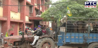 Malerkotla: stray cattle Sad Farmers Tractor-trolleys filled SDM office protest