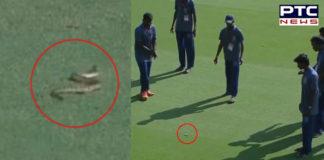Ranji Trophy: Snake delays Andhra vs Vidarbha match