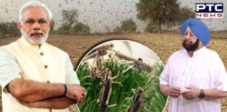 Captain Amarinder Singh to PM Narendra Modi , Locust Attack in Punjab