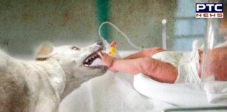 Dog Kills Newborn , Uttar Pradesh News , Dog Enters Operation Theater