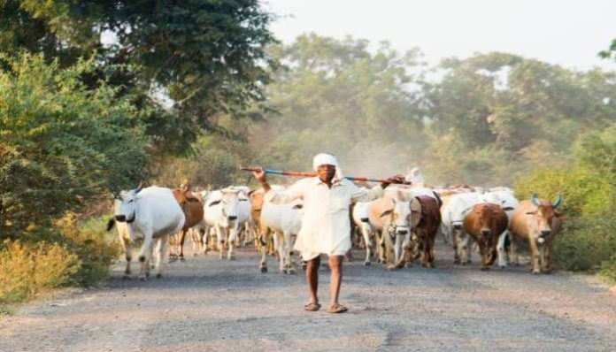 Haryana Govt Launched pilot project for cattleman