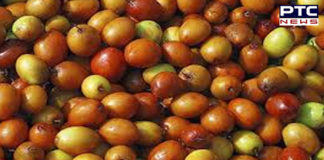 Jujube Benefits For Health