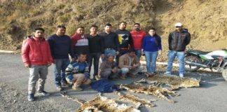 4 Leopard skins recovered from three people by Nahan police