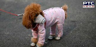 Coronavirus । Pet Dog Coronavirus । Hong Kong Coronavirus । Breaking News