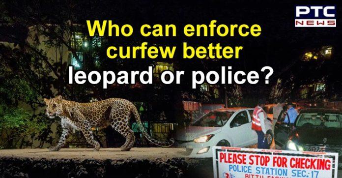 Leopard in Chandigarh , UT Advisor Manoj Parida ,Coronavirus Cases