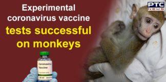 Coronavirus Vaccine Tests Successful on Monkeys and Rats | COVID 19 China