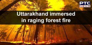 Uttarakhand Forest Fire in Kumaon , Garhwal | Wildfires | Wildlife in Danger