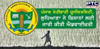 Punjab Agricultural University, Ludhiana issues advisory for farmers