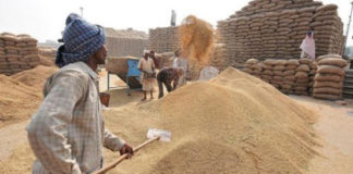 HARYANA GOVERNMENT TO PROCURE WHEAT OF OTHER STATES