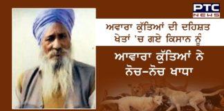 Samana: Pack of stray dogs mauls a farmer to death