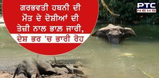 pregnant female elephant death Palakkad Kerala