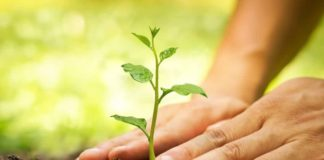 1.20 crore saplings to be planted in current year in Himachal