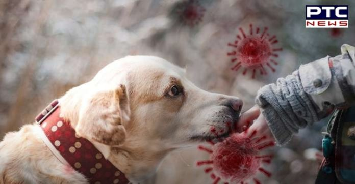 Trained Dogs Can Detect Coronavirus Infection In Humans