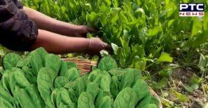 Wonderful Health Benefits Of Spinach