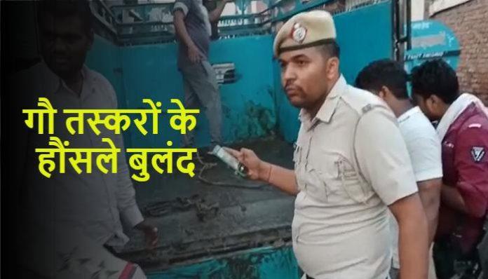 Cow smugglers fired on Gau Raksha Haryana News in Hindi (1)