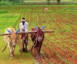 Minimum Support Price for Year 2021-2022 | Hindi News